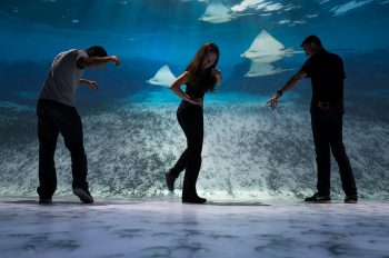 National Geographic Encounter: Ocean Odyssey Officially Opens October 6, 2017