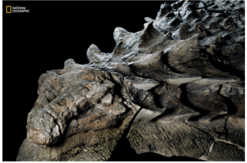 One of the Best-Preserved Dinosaur Fossils Ever Discovered Publicly Unveiled For First Time