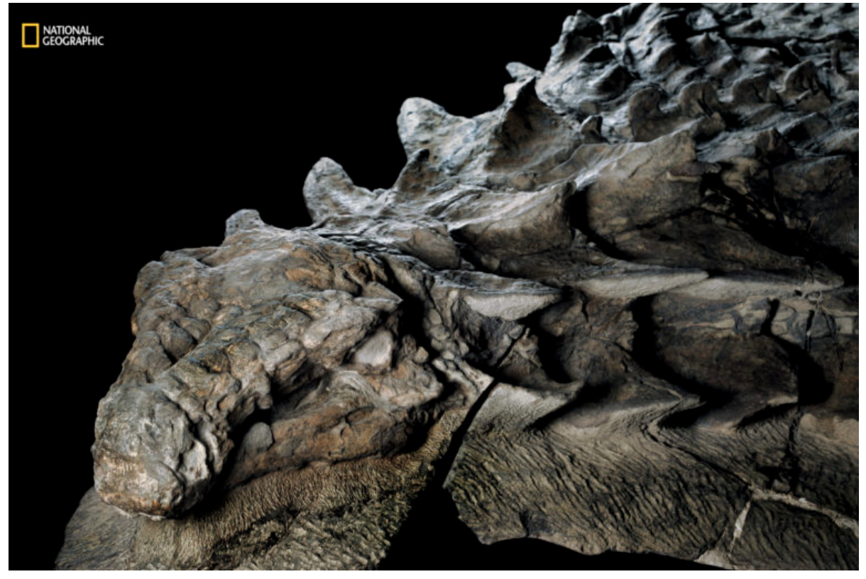 Picture of Nat Geo fossils of a dinosaur