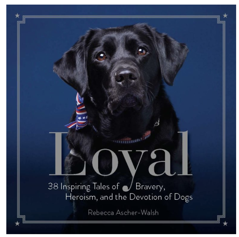 Picture of Loyal cover