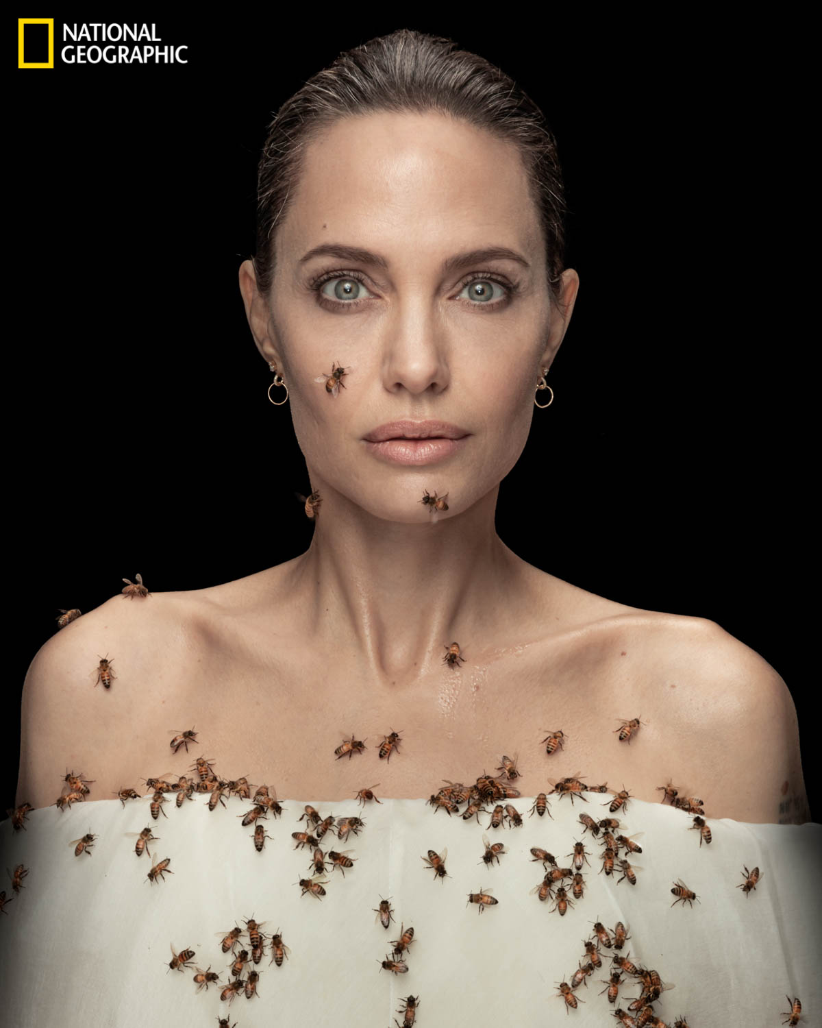 NATIONAL GEOGRAPHIC CELEBRATES 'WORLD BEE DAY' WITH ANGELINA JOLIE IN A COLLABORATIVE EFFORT TO PROTECT BEES